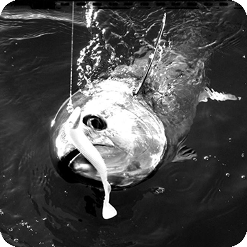 Soft bait per il tonno!