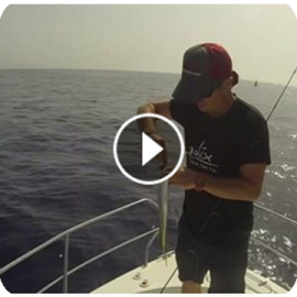Molix Piper Action video from Spain!!
