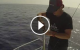 molix piper action video
