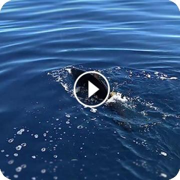 Skirmjan Tuna Stick Special! [ITA/ENG]