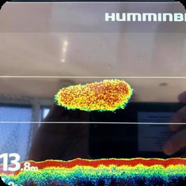 Humminbird Helix ed i Bianchetti