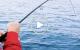 Fioretto Speciale Soft Stickbait _preview