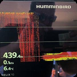 Humminbird – Totani nel mirino!