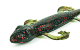 Lizard _preview