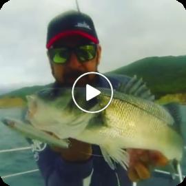 Stick Bait 120 Baitfish in action!